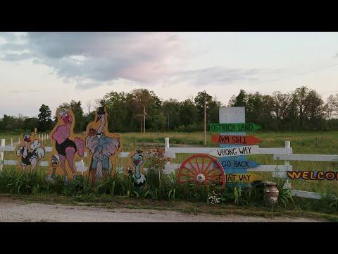 "Страусиная ферма ""Ostrich Land"", Ontario"